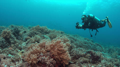Diver on a coral reef with plenty fish 4k Filmmaterial