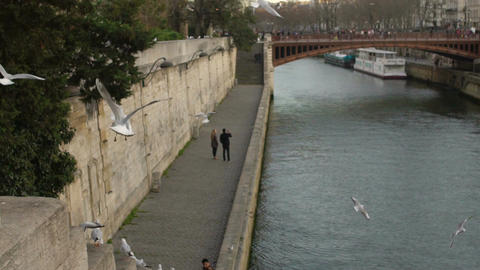 Man and woman walking near river, many seagulls flying above water in slow-mo Footage