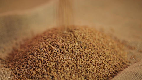 Buckwheat grain pouring on sack cloth, cereal processing industry, healthy food Footage