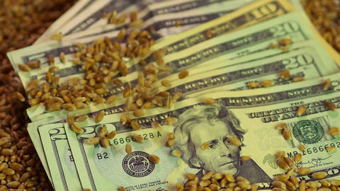 Wheat seeds dropping on paper money, lucrative business, food grain export Footage