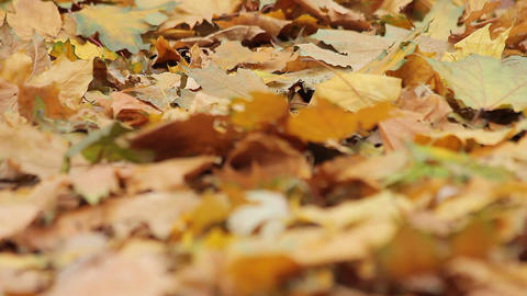 Windy weather in autumn park, dead yellow leaves covering ground, nostalgia Footage