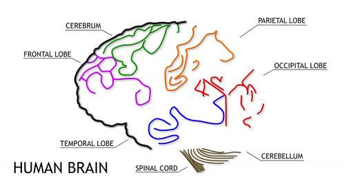 4K Human Brain 02 Stock Video Footage