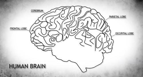 4K Human Brain 02 Japanese Animation