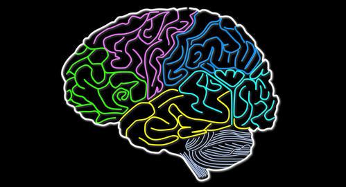 4K Human Brain 06 Animation