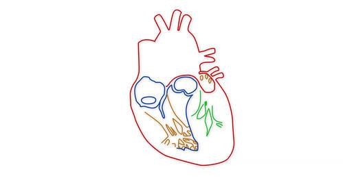 4K Human Heart 02 Stock Video Footage