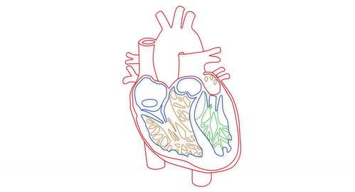 4K Human Heart 04 Stock Video Footage