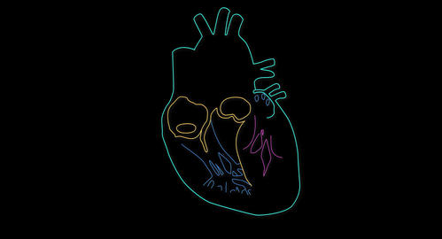 4K Human Heart 06 Stock Video Footage