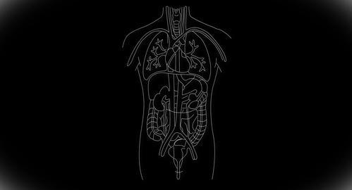 4K Human Organs 04 Animation
