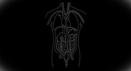 4K Human Organs 08 Stock Video Footage