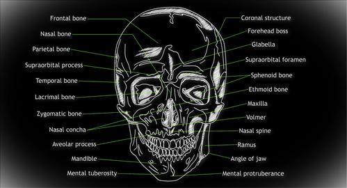 4K Human Skull 02 front Animation