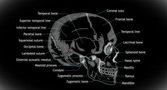 4K Human Skull 06 Side stock footage