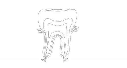 4K Human Tooth Structure 02 Stock Video Footage