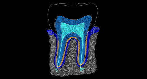 4K Human Tooth Structure 06 Stock Video Footage