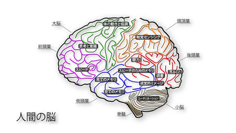 Human Brain 01 Japanese Stock Video Footage