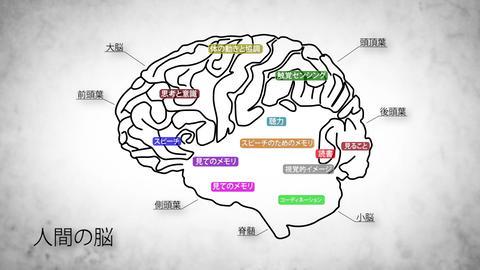 Human Brain 02 Japanese Stock Video Footage