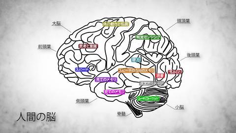 Human Brain 02 Japanese Animation