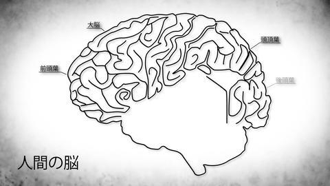 Human Brain 03 Japanese Stock Video Footage