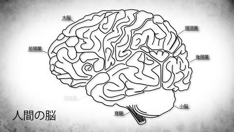 Human Brain 03 Japanese Animation