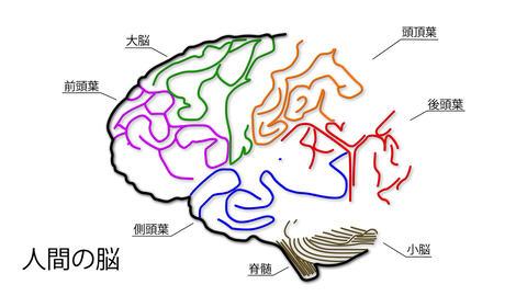 Human Brain 04 Japanese Stock Video Footage