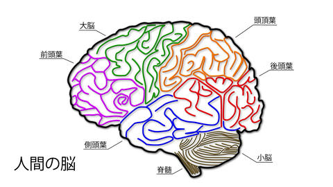 Human Brain 04 Japanese Animation