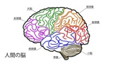 Human Brain 04 Japanese Animation