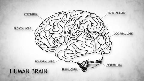 Human Brain 05 Animation