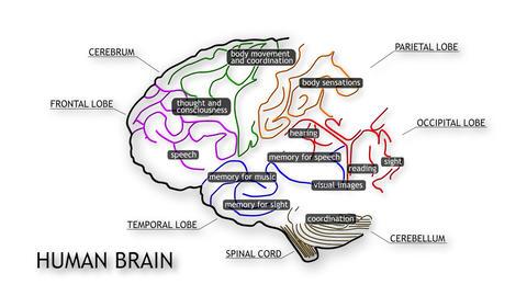 Human Brain 09 Stock Video Footage
