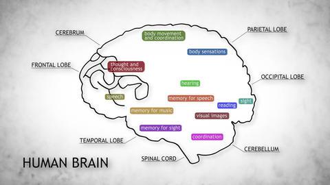 Human Brain 11 Stock Video Footage