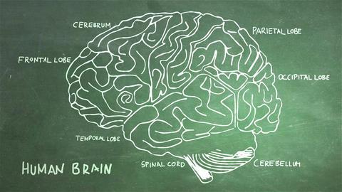 Human Brain 13 Stock Video Footage
