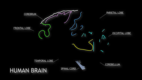 Human Brain 15 Stock Video Footage