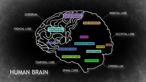 Human Brain 17 Stock Video Footage