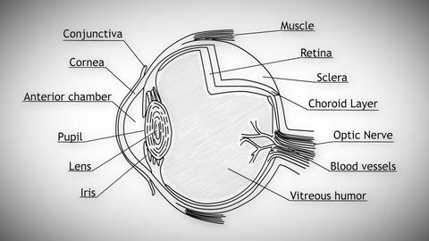 Human Eye 01 Animation