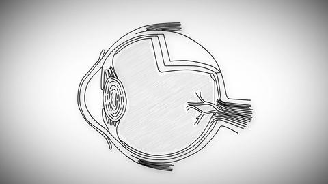 Human Eye 03 Animation