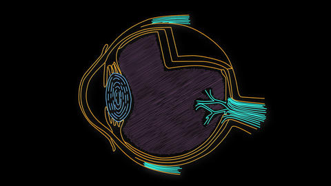 Human Eye 07 Animation