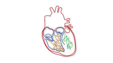 Human Heart 04 Stock Video Footage
