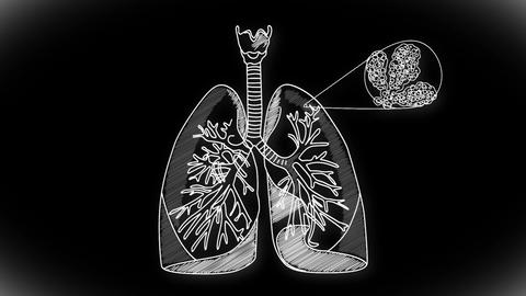 Human Lung 04 Animation