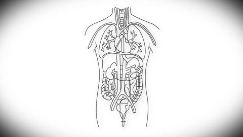 Human Organs 03 Stock Video Footage