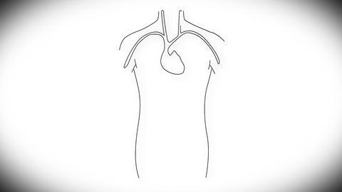Human Organs 07 Stock Video Footage