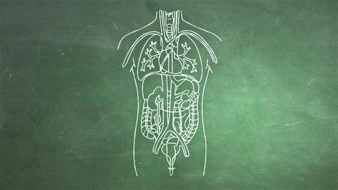 Human Organs 09 Stock Video Footage