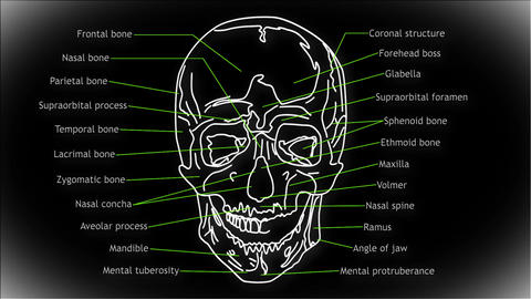 Human Skull 02 front Stock Video Footage