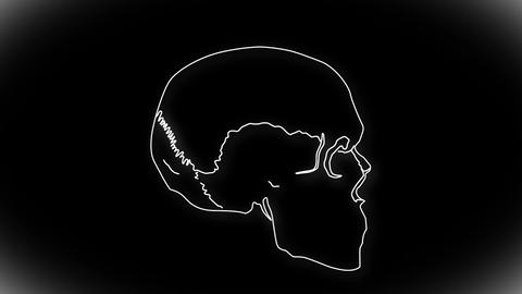 Human Skull 06 side Stock Video Footage