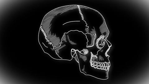 Human Skull 08 side Stock Video Footage