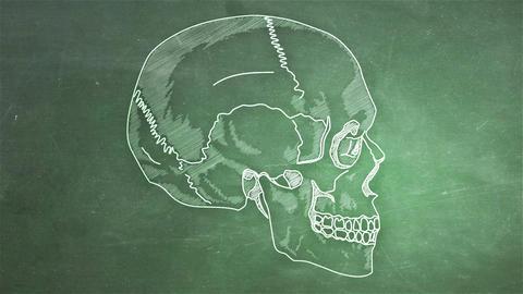 Human Skull 10 side Stock Video Footage