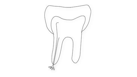 Human Tooth Structure 04 Stock Video Footage