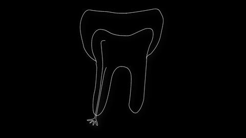 Human Tooth Structure 06 Stock Video Footage