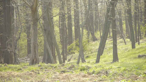 glass and forest.Thick... Stock Video Footage