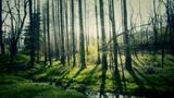 Sunlight woods.Weeds by river,dense cedar dawn-redwood forest,woods,Jungle,shrub Footage