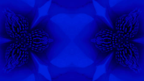 Beautiful magnolia bloom Kaleidoscope.pattern,four... Stock Video Footage