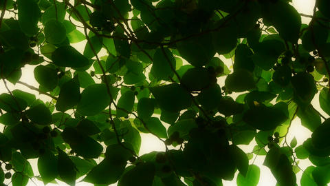 The dense branches foliage covered sky,sunlight through... Stock Video Footage