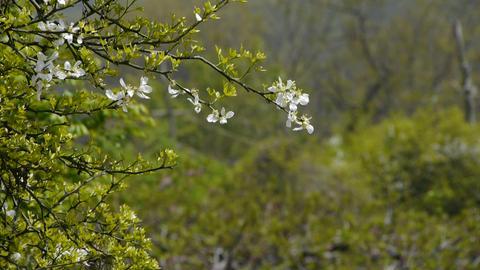 Flowers sway in wind.Bees flying in flowers &... Stock Video Footage